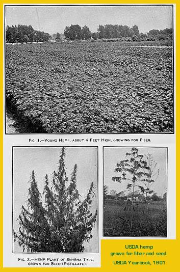 1901 USDA yearbook